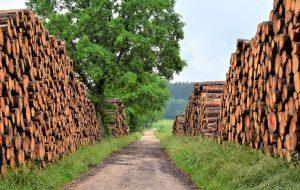 Benefits of Woodworking